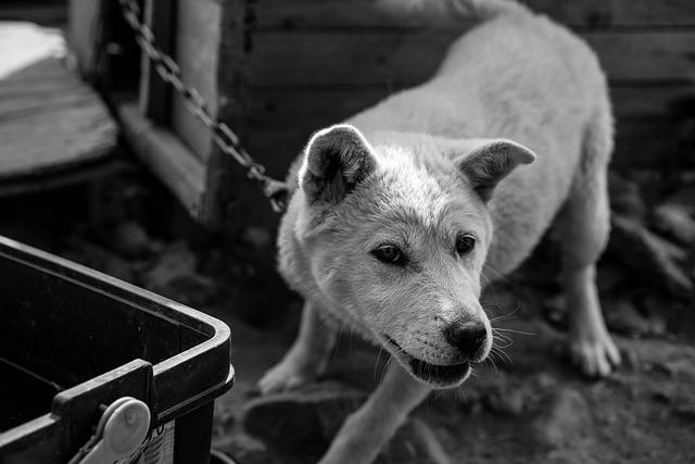 dog-765762_640
