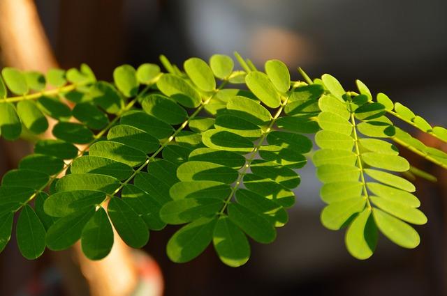 leaves-1309433_640